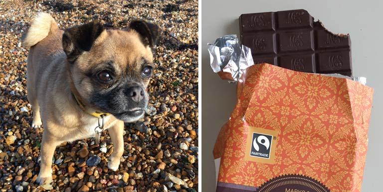 dog-and-chocolate